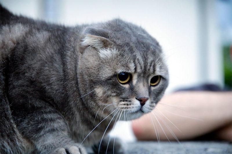 Katzen-Outdoor-Portrait Webfoto-Oberland